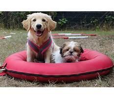 Best Dog training egham