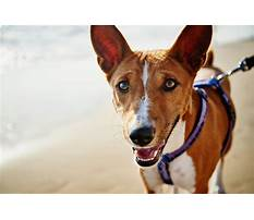 Best Dog training egypt