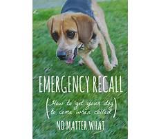 Best Dog training emergency recall