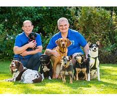 Best Dog training emmett idaho