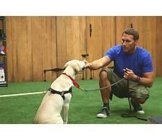 Best Dog training employment
