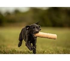 Best Dog training emporia ks