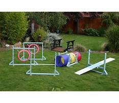 Best Dog training equipment australia