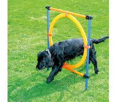 Best Dog training equipment list