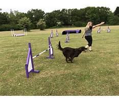 Best Dog training essex county