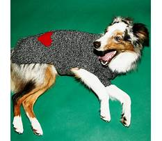 Best Dog training etobicoke area