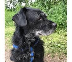 Best Dog training etobicoke ontario