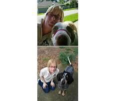 Best Dog training eustis fl.aspx