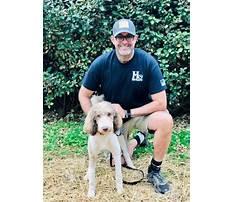 Best Dog training hickory north carolina.aspx