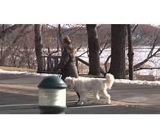 Best Dog training in minneapolis.aspx