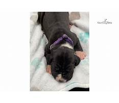 Best Dog training in oklahoma city.aspx