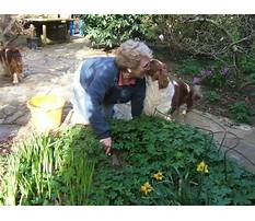 Best Dog training in pa.aspx