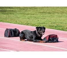 Best Dog training in south carolina.aspx
