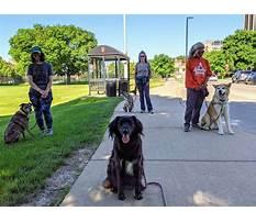 Best Dog training madiosn middleton wi.aspx