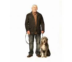 Best Dog training melbourne cbd