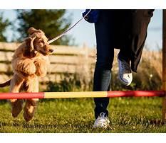 Best Dog training near lockport il.aspx