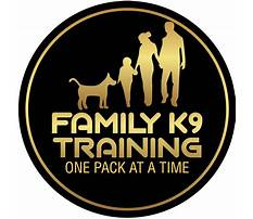 Best Dog training orlando rates