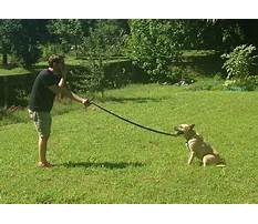 Best Dog training plainfield indiana
