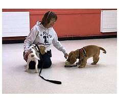 Best Dog training rhondda cynon taff