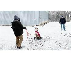 Best Dog training richmond indiana.aspx