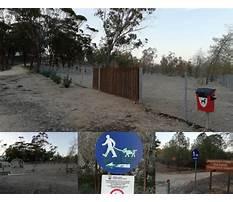 Best Dog training school cyprus
