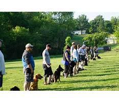 Best Dog training schools in florida.aspx