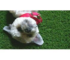 Best Dog training show cbs