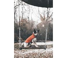 Best Dog training sydney cbd