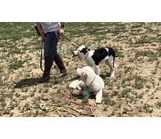 Best Dog training thornton merseyside