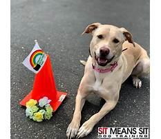 Best Dog training tigard oregon.aspx