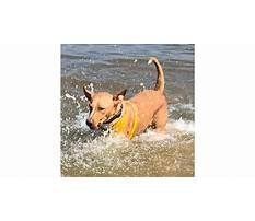 Best Dog training tullamarine.aspx