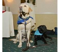 Best Dog training washington dc area.aspx