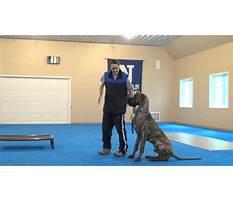 Best Dog training wellington