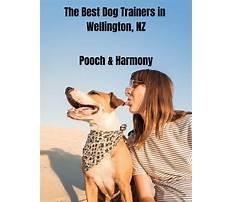 Best Dog training wellington co
