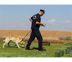 Best Dog trainingdk