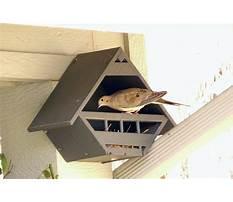 Best Dove bird house for sale