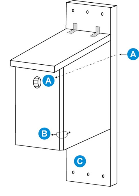Downy Woodpecker Nest Box Plans