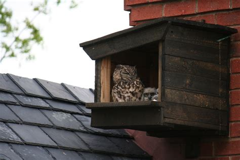 Eagle-Owl-Nesting-Box-Plans
