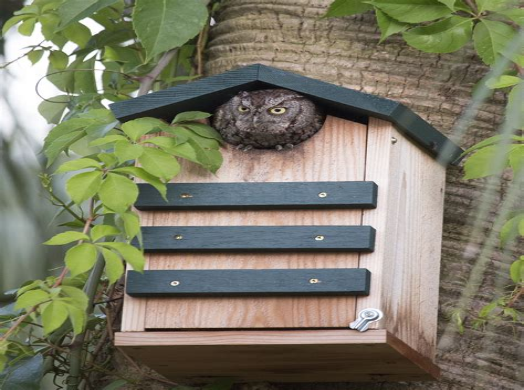 Eastern-Screech-Owl-Box-Plans