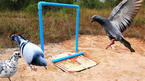 Easy Diy Bird Trap For Kids