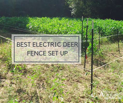 Electric Deer Fence Plans