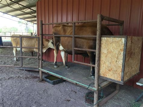 Family-Cow-Barn-Plans
