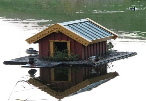 Farm-Duck-House-Plans