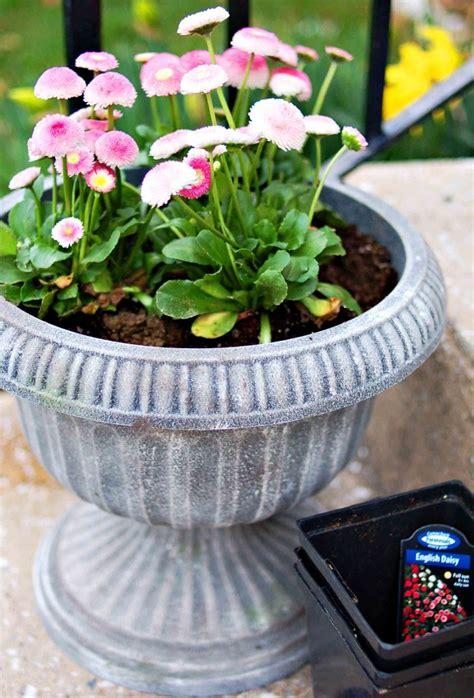 Faux-Concrete-Planters-Diy