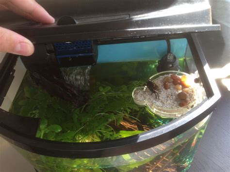 Fiddler Crab Tank Blog Diy
