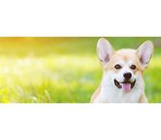 Best Field of dreams dog training roanoke va.aspx
