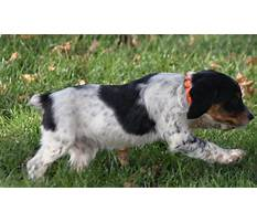 Best Field training french brittany