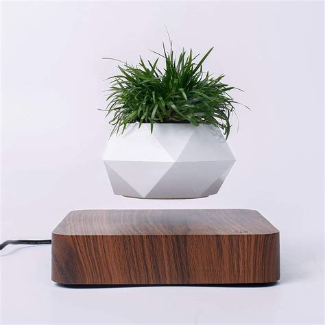 Floating Desk Plant