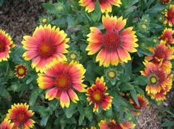 Flower Bed Plants For Zone 10