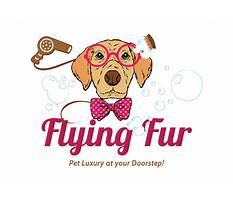 Best Flying fur dog training.aspx